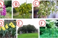 6 pictures of poisonous plants for quiz