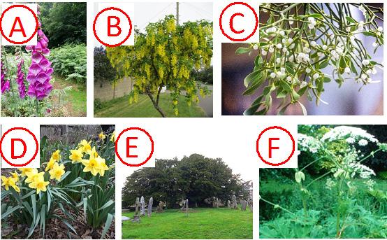 6 pictures of poisonous plants for quiz