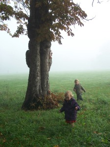 Forest Childcare misty sept morning